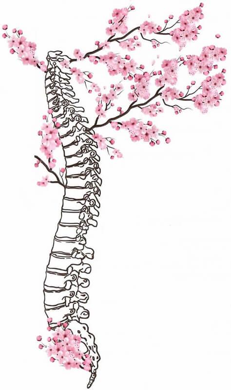 Columna vertebral sana